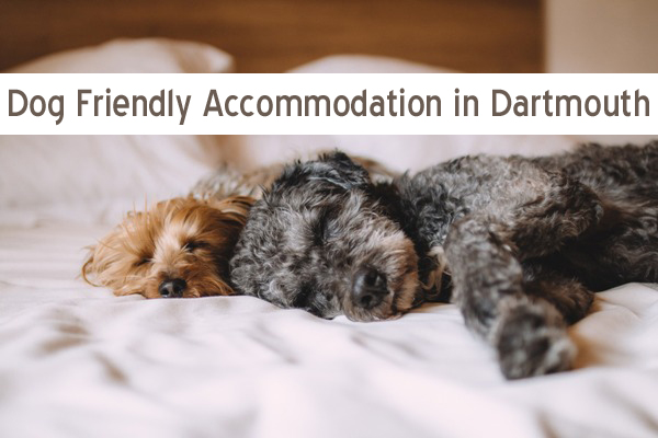 Dog Friendly Accommodation in Dartmouth