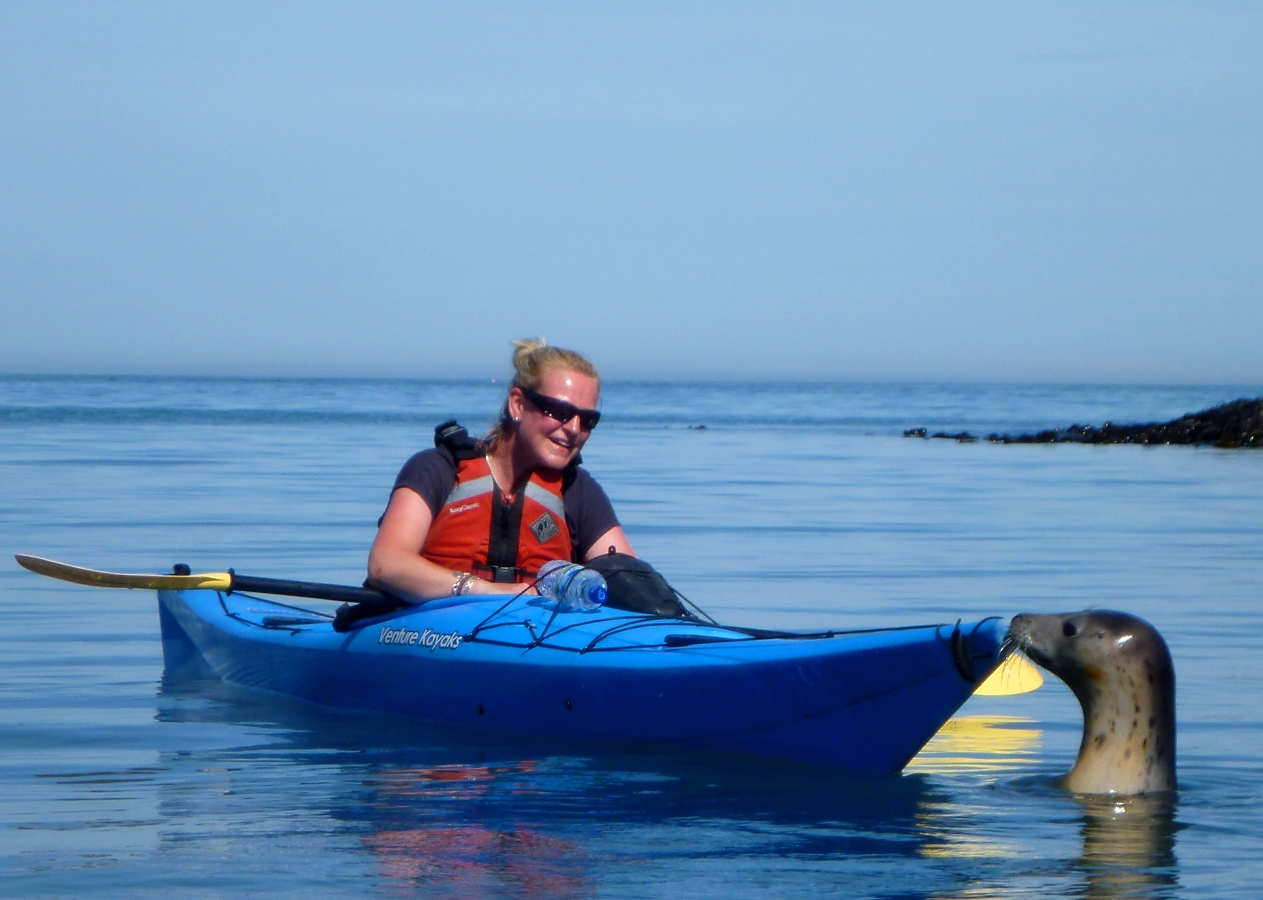 Sea Kayak Devon - Kayak and Seal